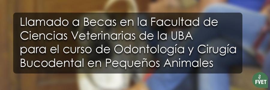 Llamado a Becas en la Facultad de Ciencias Veterinarias de la UBA para el curso de Odontología y Cirugía Bucodental en Pequeños Animales
