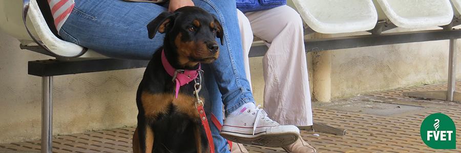 Comunicado sobre medidas con respecto a las mascotas en zonas de desastre