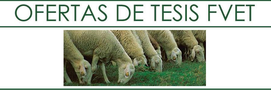 Oferta de Tesis en Seguimiento del efecto del Cloruro de Litio como aversor en ovinos