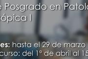 Curso de Posgrado en Patología macroscópica I