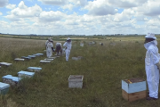 Encuesta de pérdida de colmenas de abejas en Latinoamérica – Temporada 2016/2017