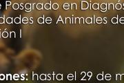 Curso de Posgrado en Diagnóstico de enfermedades de animales de producción I