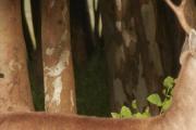 """Curso: """"Biología y Conservación de cérvidos neotropicales"""""""
