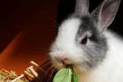 """Curso Optativo: """"Cría de conejos"""""""