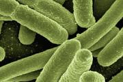 """Curso de Educación Permanente: """"Microbioma en la salud, la producción y el bienestar"""""""