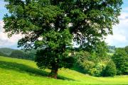 Conferencia sobre La Crisis Ambiental Global: Repensando la Gestión de los Recursos Naturales