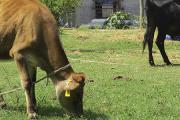 Curso sobre Bienestar en Animales de Producción