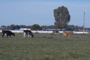"""Curso de Posgrado: """"Procesos asociativos rurales. Desarrollo, tierra, producción y redes de consumo"""""""