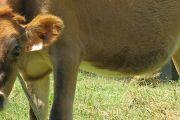 """Curso """"Bienestar Animal en el Sector Productivo"""""""
