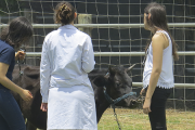 Cronograma de los Cursos del Orientado de Producción Animal (OPA Sur)